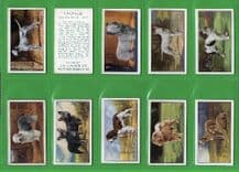 Cigarette cards Dogs 1936 by Gallaher set