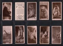 Collectible Cigarette cards Cute animal photo, Zoo animals 1929