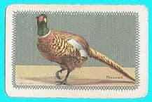 Narrow named playing card Pheasant by Barribal