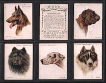 Tobacco cards Cigarette cards Dogs Heads 1929 by Wardle