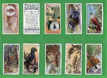 Tobacco cards cigarette cards Wonders of nature, 1924