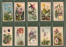 Tobacco cards set  cigarette cards 1928 Wayside flowers rare