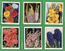Tobacco cigarette cards Garden Flowers new Varieties
