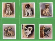 Tobacco Cigarette cards set  Dogs - Our Puppies 1936